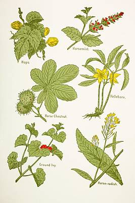 Medicinal Herbs And Plants. Clockwise Poster