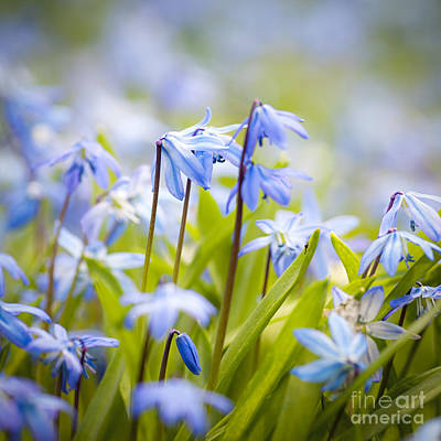 Spring Blue Flowers Poster