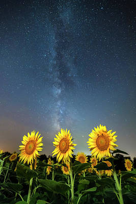 Sunflower Galaxy Poster by Ryan Heffron
