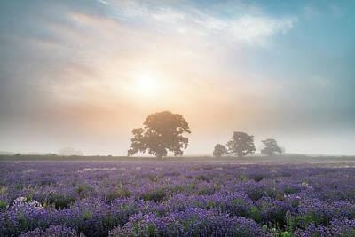 Beautiful Dramatic Misty Sunrise Landscape Over Lavender Field I Poster