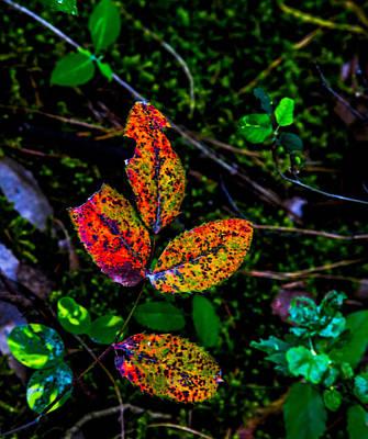 Leaf Poster by Angus Hooper Iii