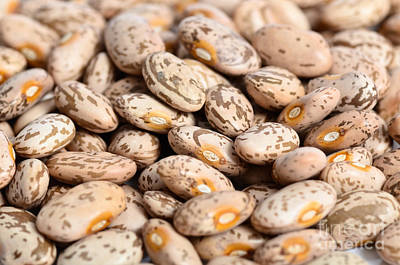 Pinto Beans Poster by Photo Researchers Inc