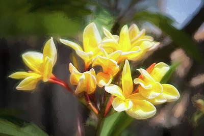 Plumeria Frangipani Hawaiian Flower  Poster