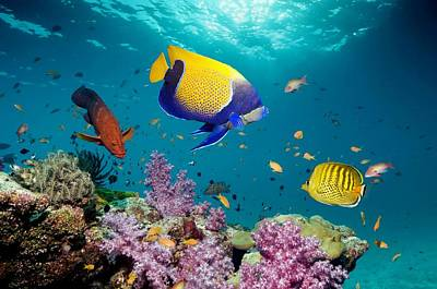 Tropical Reef Fish Poster by Georgette Douwma