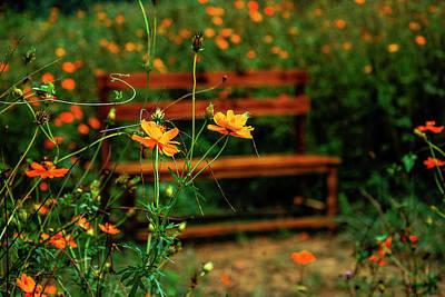 Galsang Flowers In Garden Poster