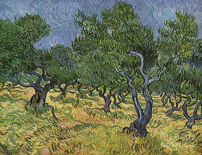 Olive Orchard Poster by Vincent Van Gogh