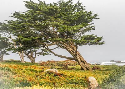 #7803 - Monterey, California Poster