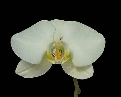 Stunning Orchids Poster