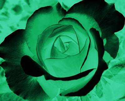 The Green Rose Poster by Belinda Cox