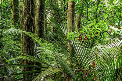 Poster featuring the photograph Tropical Jungle by Les Cunliffe