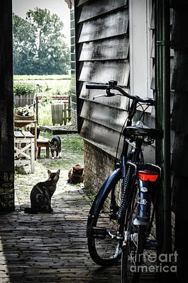 A Backstreet With Cats And Bicycle In Marken Poster