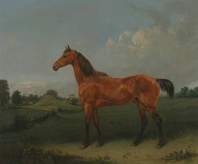 A Bay Horse In A Field Poster