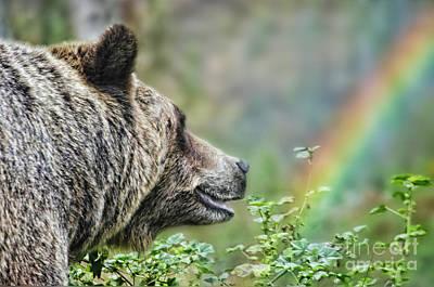 A Bear Watching The Sun Return Poster by Jim Fitzpatrick
