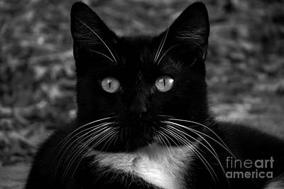 A Black Cat's Life -florida Poster