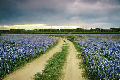 A Bluebonnet Trail Under Stormy Sky - Texas Poster