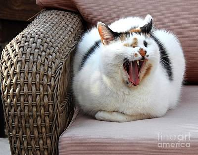 A Cat Yawn Or A Scream? Poster by Phyllis Kaltenbach