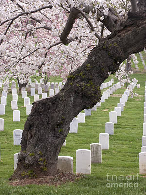 A Cherry Tree In Arlington National Cemetery Poster by Tim Grams