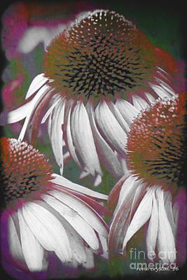 A Cone Flower Triad Poster by Rene Crystal