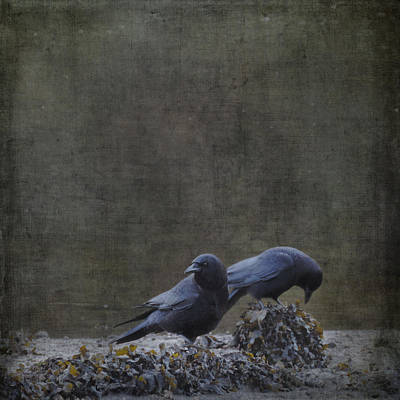 Blackbirds At The Beach Poster