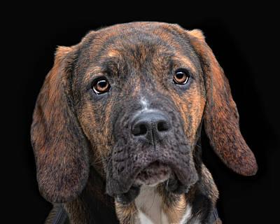 a dog named Lucifer Poster by Joachim G Pinkawa