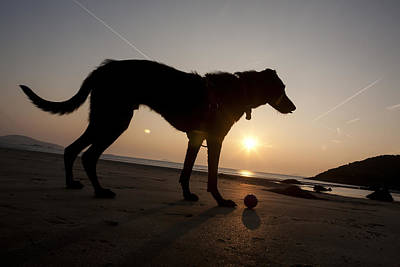 A Dog With His Ball At Sunset Poster