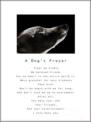 A Dog's Prayer - White Poster by Angela Rath