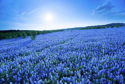 A Field Of Eternal Blue - Bluebonnet - Texas Poster