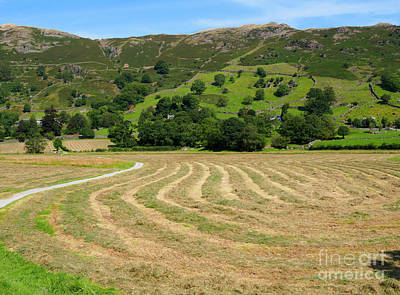 A Field Of Freshly Mown Hay Drying In Great Langdale Poster