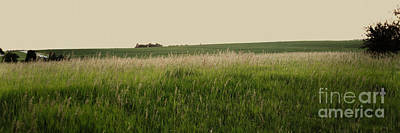 Poster featuring the photograph A Field Of Grass by Sandy Adams