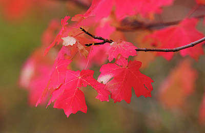 A Flash Of Autumn Poster