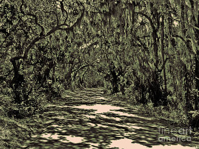 A Florida Canopy Poster by Lydia Holly