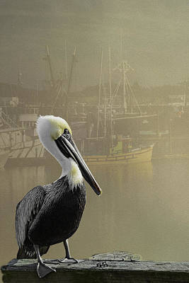 A Foggy Pelican Sunset Poster