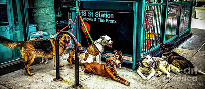A Gang Of Dogs In Nyc Poster by Julian Starks