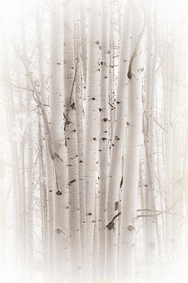 Poster featuring the photograph A Gathering by The Forests Edge Photography - Diane Sandoval