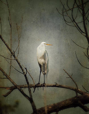 A Great Egret Poster