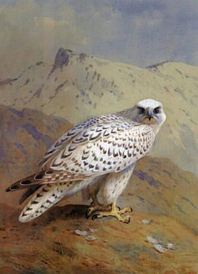 A Greenland Or Gyr Falcon Poster by Archibald Thorburn