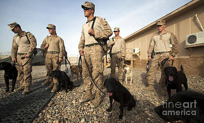 A Group Of Dog-handlers Conduct Poster