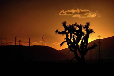 Poster featuring the photograph A Holy Joshua Tree by Peter Thoeny
