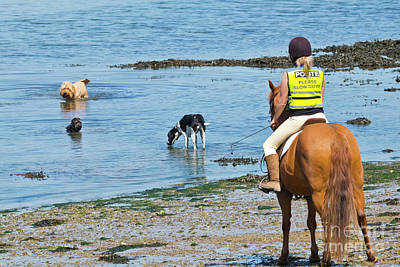 A Horse And Three Dogs At The Beach Poster by Terri Waters