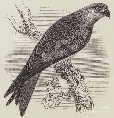 A Kite Poster