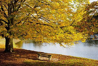 A Large Tree And Bench Along The Water Poster by John Short