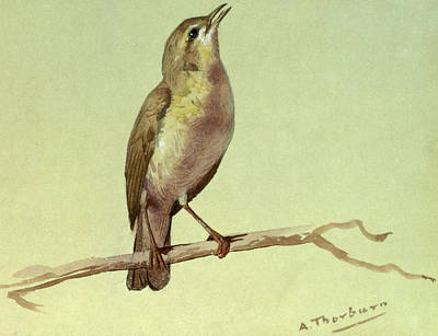 A Lark Poster by Archibald Thorburn