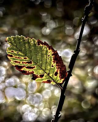 A Leaf Poster