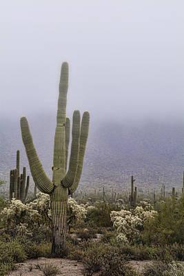 A Little Desert Fog  Poster by Saija Lehtonen