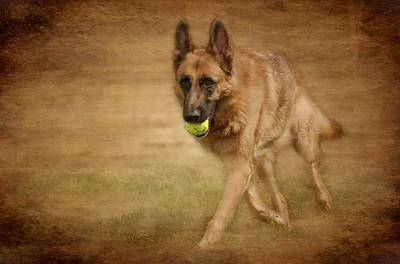 A Little Playtime - German Shepherd Dog Poster by Angie Tirado