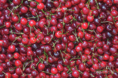 A Lotta Cherries Poster by Tim Gainey