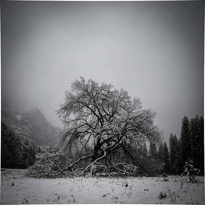A Magic Tree Poster