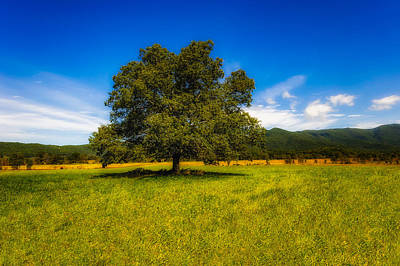 A Majestic White Oak Tree In Cades Cove - 1 Poster