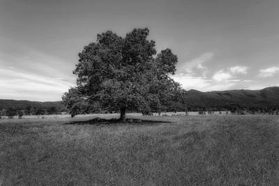 A Majestic White Oak Tree In Cades Cove - 2 Poster