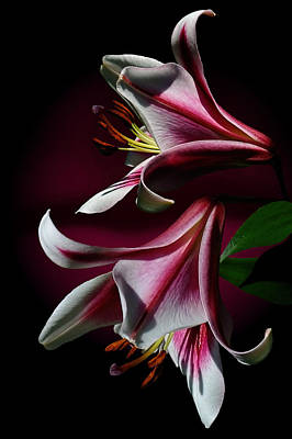 A Pair Of Lilies Poster by Judy  Johnson